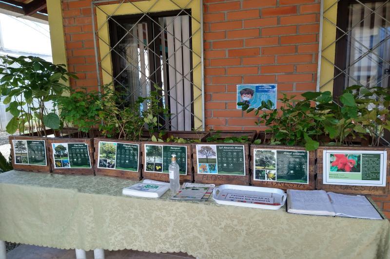 Viveiro Municipal de Itajaí retoma Feira de Doação de Mudas Nativas