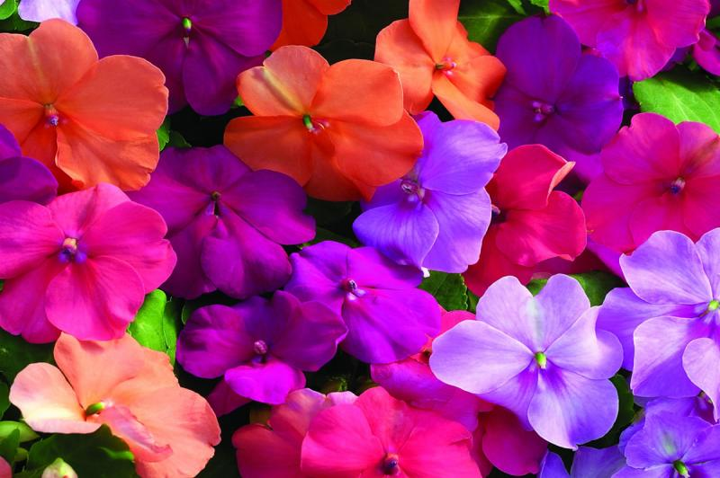 Horto distribuiu mais flores na pr�xima semana
