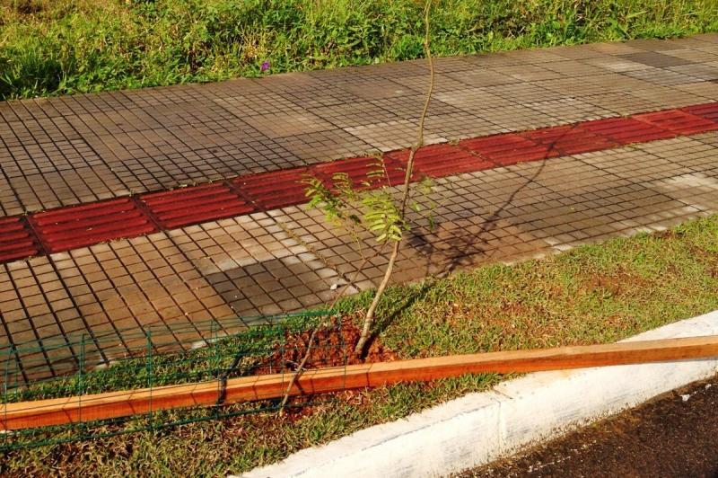 Mudas da Avenida Adolfo Konder s�o alvo de vandalismo