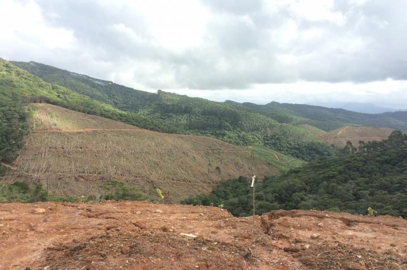 17 de julho: Dia de Prote��o �s Florestas