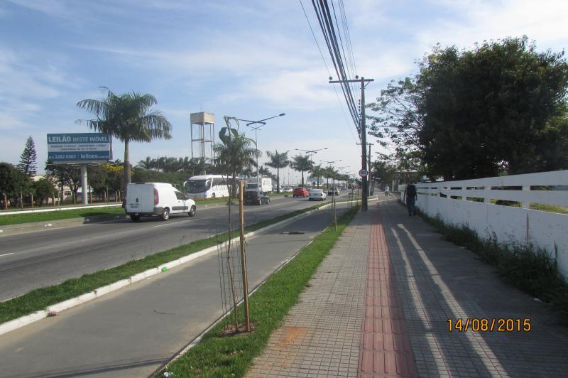 Avenida Adolfo Konder recebe arboriza��o
