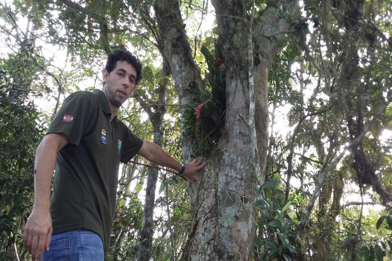 T�cnicos fazem transplante de brom�lias e orqu�deas no Parque do Atalaia