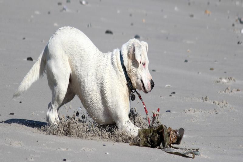 Circulação de cães e gatos nas praias de Itajaí deve ser evitada