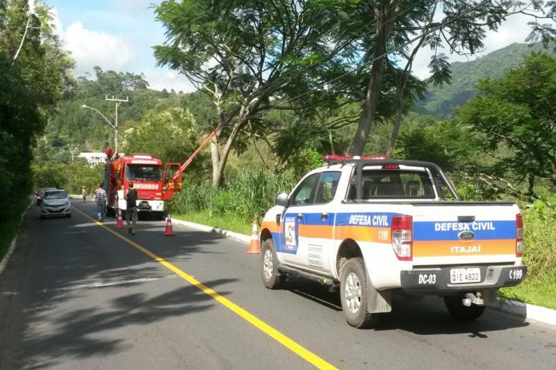 Defesa Civil integra operação para conter tombamento de árvore