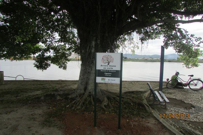 FAMAI instala 51 placas de sinalização em árvores imunes ao corte