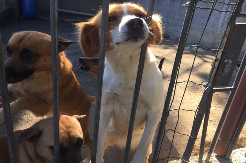 Unidade de Atendimento Provisório de Animais abre para adoção neste domingo