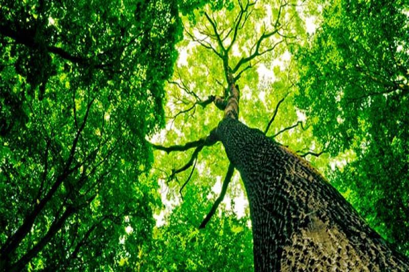 Famai lança campanha para adoção de árvores