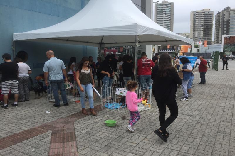Vinte e seis animais são doados durante Marejada 2017