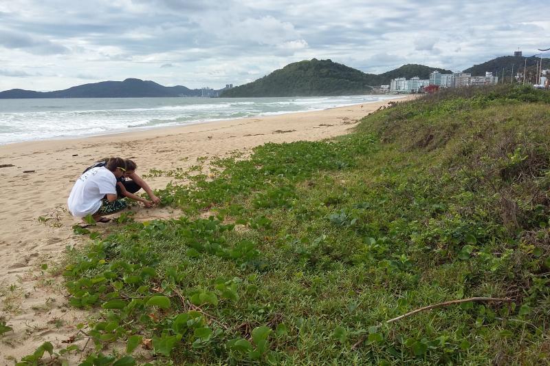 Famai coleta sementes para recuperação da restinga da Praia Brava