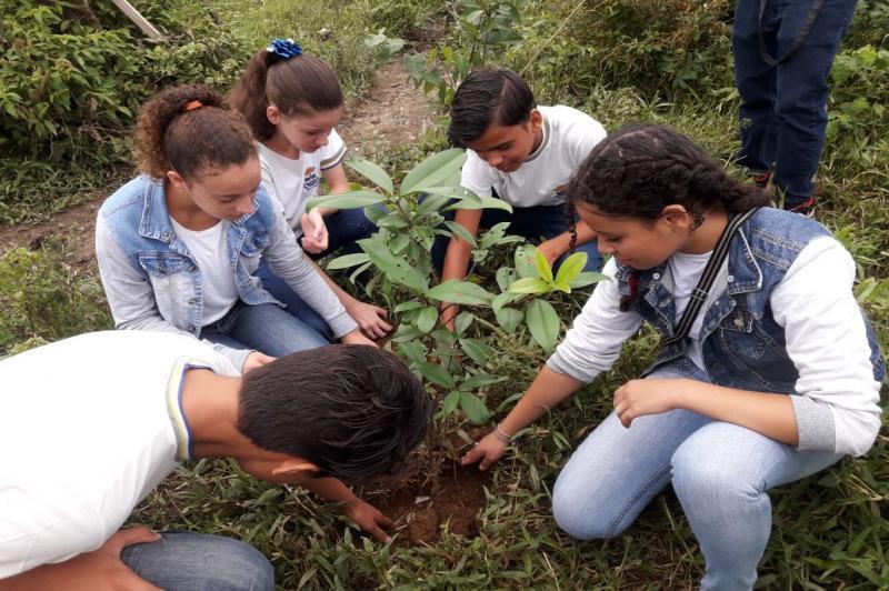 Árvores nativas foram plantadas na margem do rio Itajaí Mirim