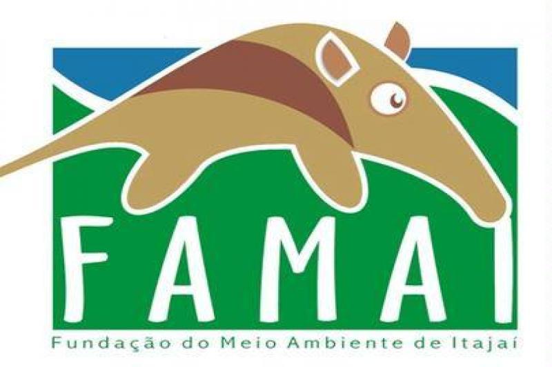 Autorizações para corte de vegetação em Itajaí estão suspensas