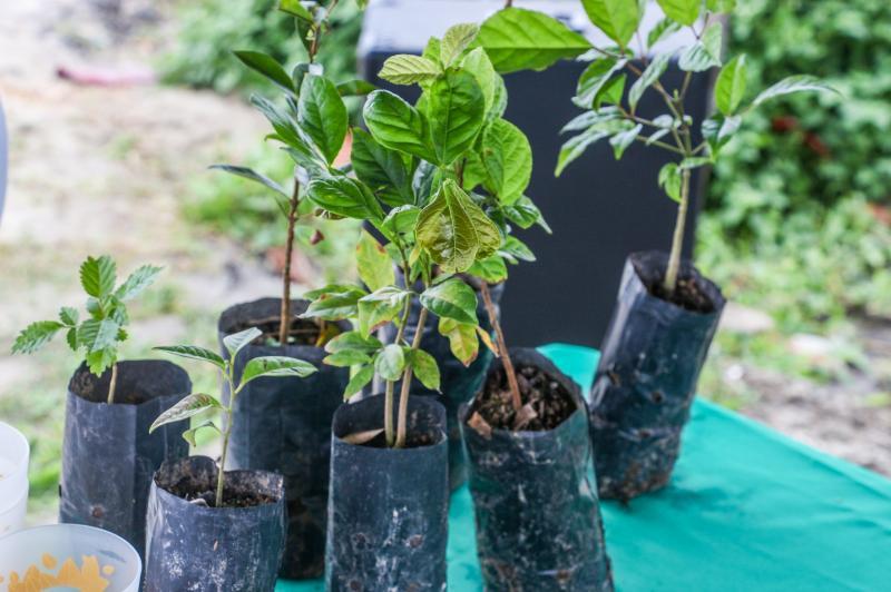 Famai realiza doação de mudas em comemoração ao Dia da Árvore nesta sexta (21)