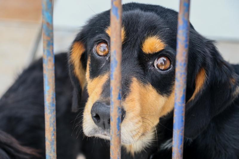 Canil Municipal abrirá no domingo para adoção de animais