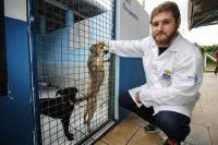 Município realiza castração e microchipagem de animais no Jardim Esperança