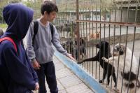 1ª Semana do Bem-Estar Animal terá feiras de doação de mudas e adoção de animais