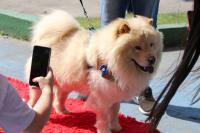 1ª Semana do Bem-Estar Animal reúne três mil pessoas com programação gratuita