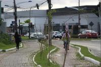 Mais de 400 mudas de árvores são plantadas na avenida Contorno Sul