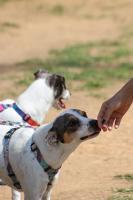 Animais de estimação exigem cuidados especiais no verão