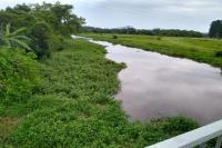 INIS realiza revitalização do Rio Itajaí-Mirim