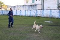 Educação lança projeto para sensibilizar alunos e comunidade sobre proteção animal