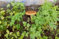 Hortas nas unidades escolares despertam hábitos sustentáveis nos alunos