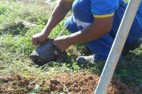 Compensa��o ambiental: 120 �rvores ser�o plantadas na Praia Brava