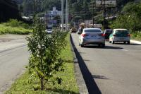 Horto realiza plantios na Osvaldo Reis e na Escola de Campo
