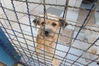 Sa�de e Famai trabalham em parceria na Unidade de Acolhimento Provis�rio de Animais