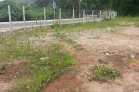 Terreno recebe limpeza e plantio de 40 mudas de árvores