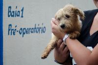 Unidade de Acolhimento Provisório de Animais vai aperfeiçoar atendimento