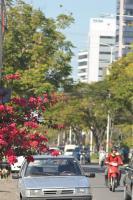 Itajaí elabora plano de arborização