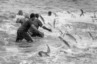 Livro sobre a pesca da tainha será lançado neste sábado durante a Marejada 2017