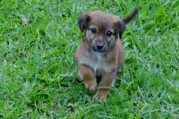 Instrução Normativa regulamenta denúncias de maus tratos a animais