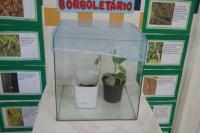 Crianças participam de projeto sobre a importância dos insetos para a natureza