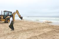Município de Itajaí retira baleia morta na Praia Brava