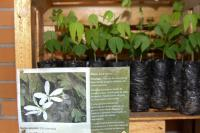 Famai realiza doação de mudas de árvores nativas na próxima semana