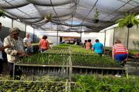 Idosos participam de visita no Viveiro de Mudas Nativas