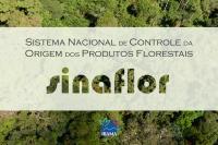 Autorizações para cortes de vegetação serão via sistema a partir de segunda-feira (07)