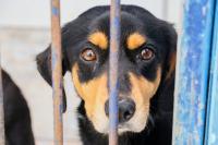 Canil Municipal terá primeira adoção de animais do ano no domingo