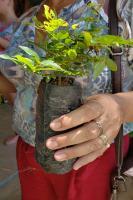 Prefeitura realiza doação de mudas de árvores nativas na próxima semana