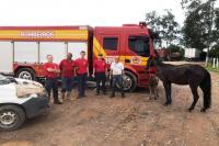 Defesa Animal resgata égua em ribeirão na Itaipava