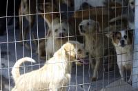 Feira de adoção ao ar livre terá cães adultos na Beira-Rio