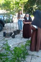 Município de Itajaí realiza plantios de mudas de árvores